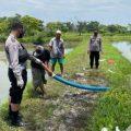 Petani Tambak Duduksampeyan Meninggal Dunia saat Hendak Panen Ikan Bandeng